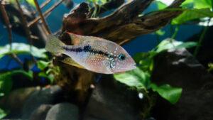 Microbeads for Fish Egg Simulaton